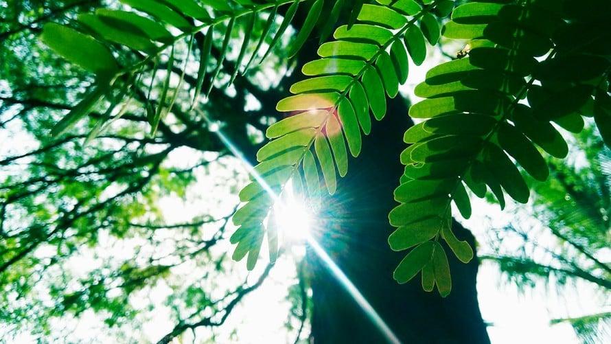 treeleaflight